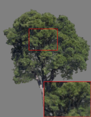 oak_uncompressed_insets.jpg