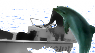 dolphin_r_02.png