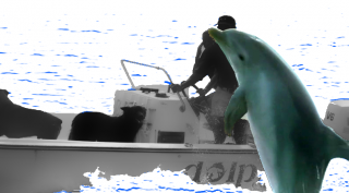 dolphin_r_01.png