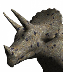 d_triceratops4.png