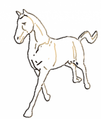 horsecol-1.png