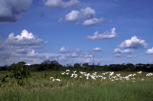 Venezuela : Estado Barinas : Savane et forêt galerie au nord du Río Apure, Pouyllau Daniel