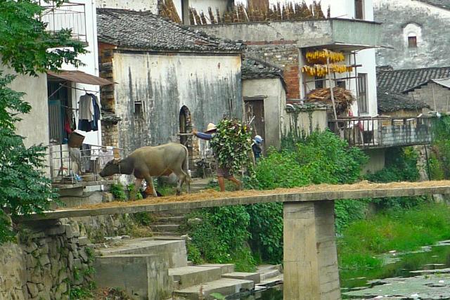 Retour au village, Elosua Miguel