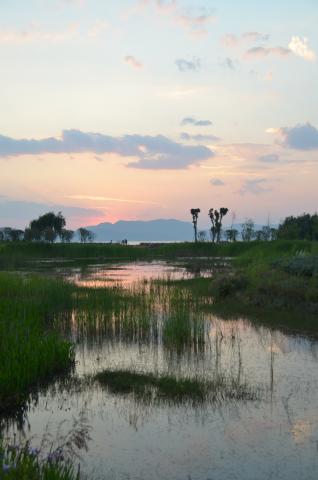 Dianchi-Kunming, Hu Ying