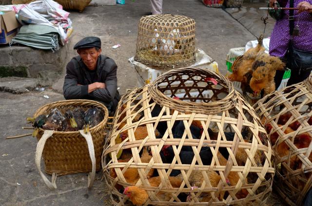Poultry market 2, Elosua Miguel