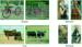 grid_over_pics4x4.jpg
